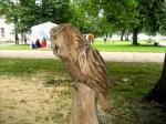 Kakk / Owl 14