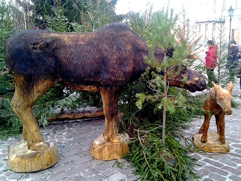 Põdrad / Moose 42