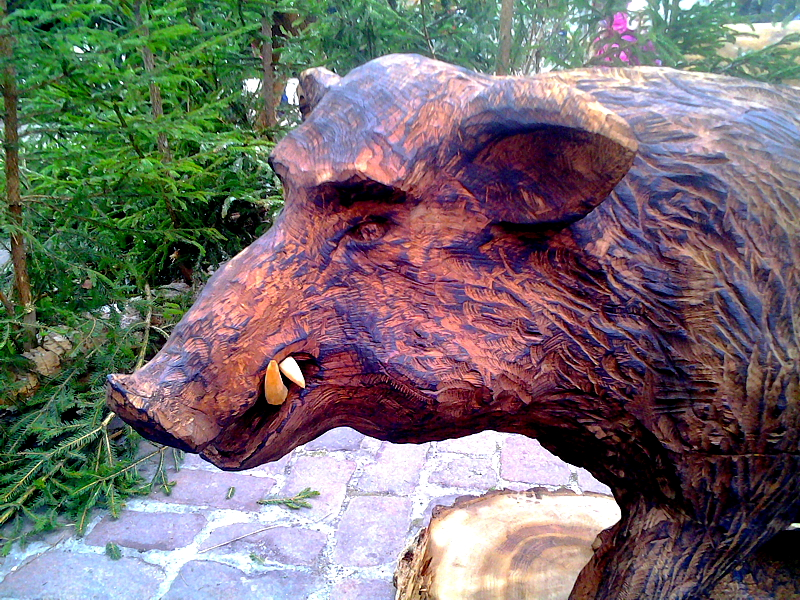 Metssiga / Wild boar 47