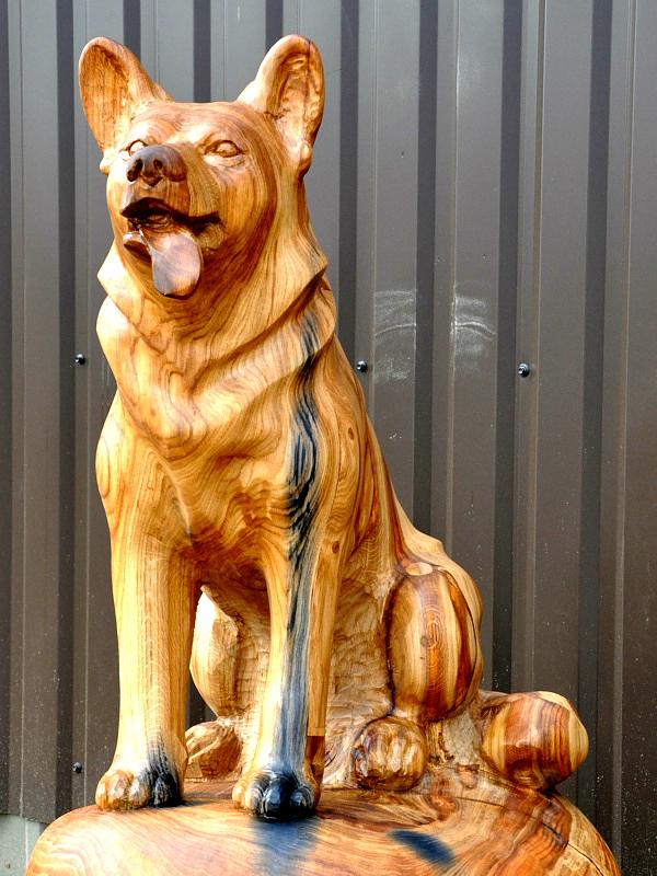 Koer / Dog 62