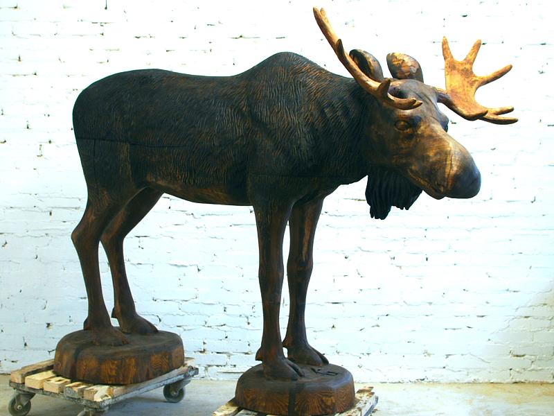 Põder / Moose 71