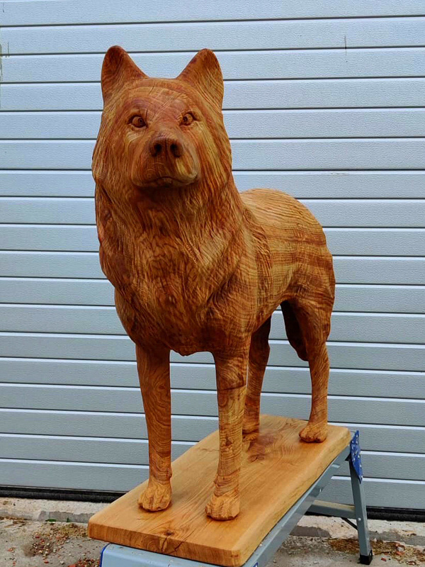 Koer / Dog 84