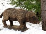 Metssiga / Wild boar 26