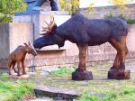 Põdrad / Moose 72