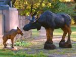 Põdrad / Moose 74