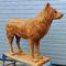 Koer / Dog 85